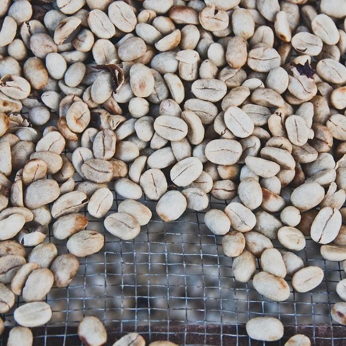 乾燥を終えた生豆